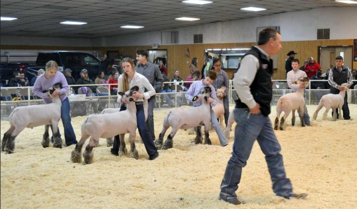 Lamb Championship Drive and Showmanships
