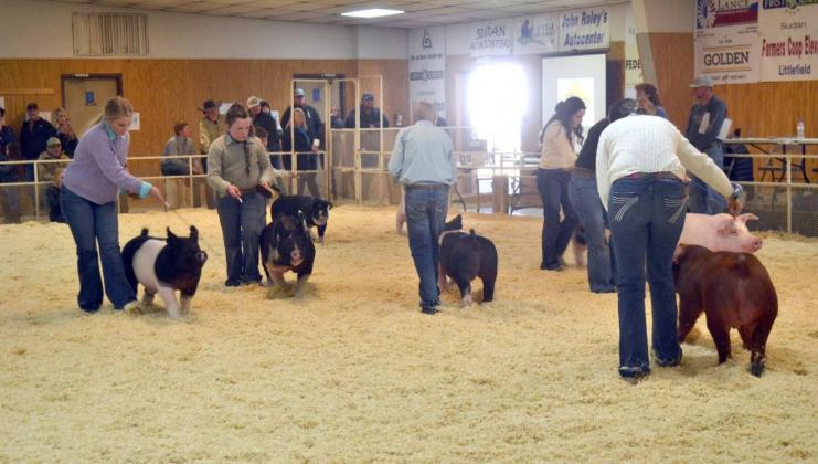 Swine Championship Drive and Showmanships